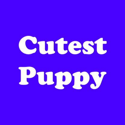 Cutest Corgi Puppy